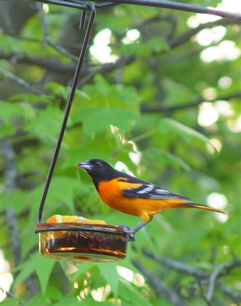 orange hanging glass dish with holder erva bird feeder
