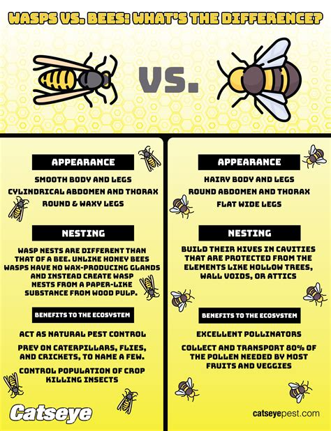 wasps  bees whats  difference catseye pest control