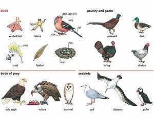 bird_1 noun - Definition, pictures, pronunciation and ...