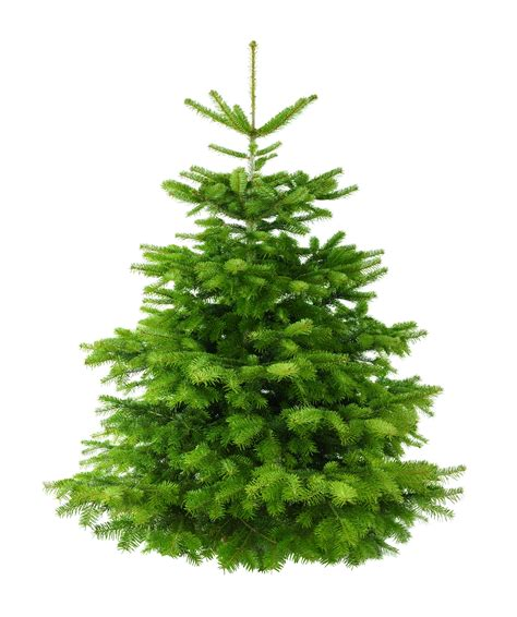 commercial christmas decorations 5ft nordman fir low needle drop
