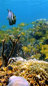 Mexico Riviera Maya Underwater