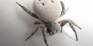 Se Débarrasser Des Araignées : une araign e se liqu fie pour tre mang e par ses petits ~ Louise-bijoux.com Idées de Décoration