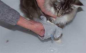 Laver Chien Savon Noir : comment laver naturellement ses animaux de compagnie astuces de grand m re ~ Melissatoandfro.com Idées de Décoration