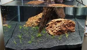 Aquarium Gestaltung Bilder : nano aquarium einrichten experiment teil 4 ~ Lizthompson.info Haus und Dekorationen