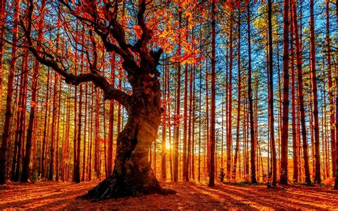 Beautiful Autumn Trees Wallpapers by Wallpaper Beautiful Autumn Sunset Forest Trees