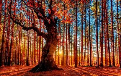 Autumn Forest Desktop Fall Background Pixelstalk