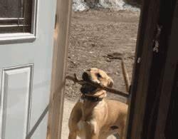 great problem solving skills rebrncom With should i get a dog door