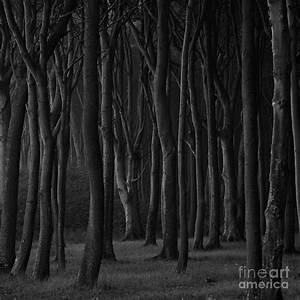 Black Forest Photograph by Heiko Koehrer-Wagner