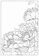 Coloring Bright Drawing Polina Peony Peonies Flower Flowers Drawings Watercolor Sketches Polinabright Poli Visit Oeffnen Floral Zu Malen sketch template