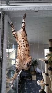 Balkonschutz Für Katzen : katzent rsicherung katzensicherung f r balkont ren katzen t rsicherung ~ Eleganceandgraceweddings.com Haus und Dekorationen