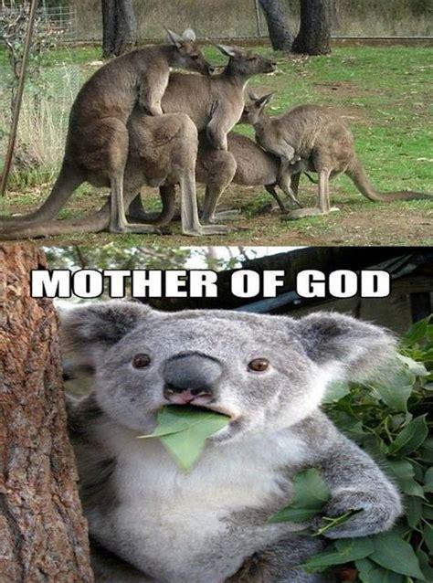 Kangaroo Meme - mother of kangaroo funny pictures quotes memes jokes