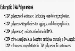 Mbbs Medicine  Humanity First   Dna Replication And Repair