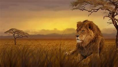 Lion Forest Animal Animals Wallpapers 5k