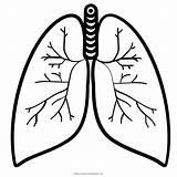 Coloring Lung Colorare Polmone Ultra Pulmao Desenho Colorir Disegni Stampare sketch template