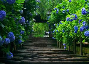 Backgrounds For Photoshop Flower Garden Background ...