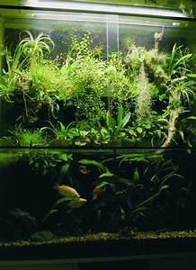 Verein Aquarium Zrich