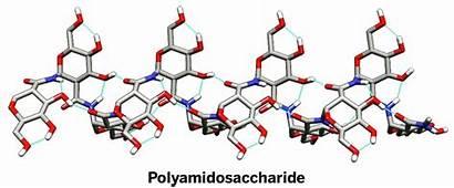 Polysaccharide Amide Linked Soc Chem Credit Cen