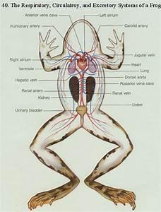 Bioweb Images