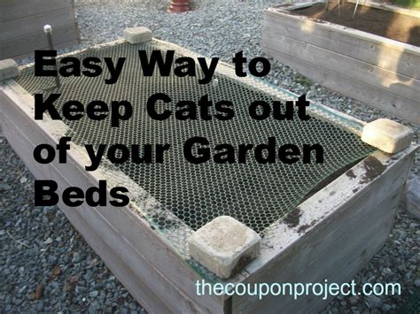 keep cats out of garden cheap and easy solution to keep cats out of your garden