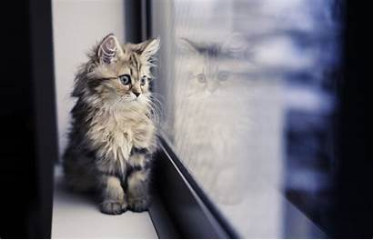 Cat Window Reflection Paws Desktop Wallpapers Background