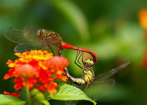 beautiful macro photography shots insect design swan