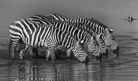 auf wunsch auf wunsch foto bild tiere wildlife s 228 ugetiere bilder auf fotocommunity