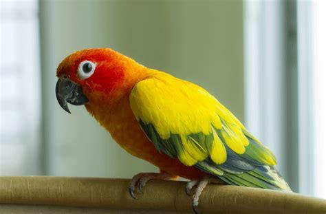 Most Popular Pet Birds