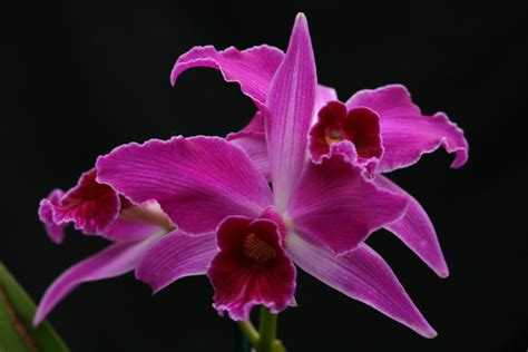 types of orchids types of orchids