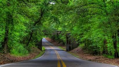Road Trees Tree Forest Landscape Wallpapers Bridge