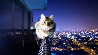 Cat Wallpapers Cats Desktop Background Kitten Computer