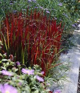 Blühende Pflanzen Winterhart : 1000 ideas about winterharte pflanzen on pinterest ~ Michelbontemps.com Haus und Dekorationen