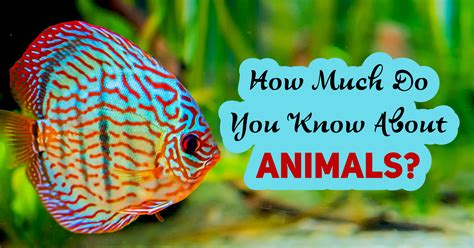 How Much Do You Know About Animals? - Quiz - Quizony.com