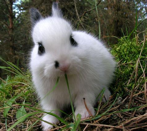dwarf rabbit baby rabbits cute feed eating breed healthy bunnies bunny babies polish food very feeding funny genetics peanuts pets