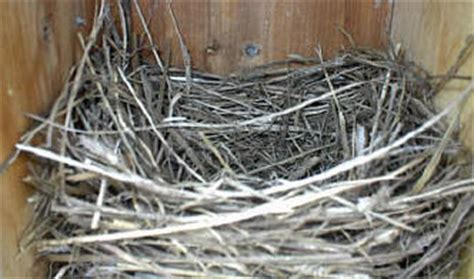 top 28 when do birds start nesting img 2559 jpg