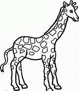 Coloring Pages Giraffe Printable Giraffes Popular sketch template