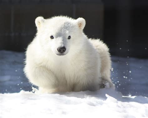 each day an adventure in alaska our baby polar