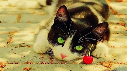 Cat Cool Backgrounds Christmas Kitten Wallpapers Grumpy