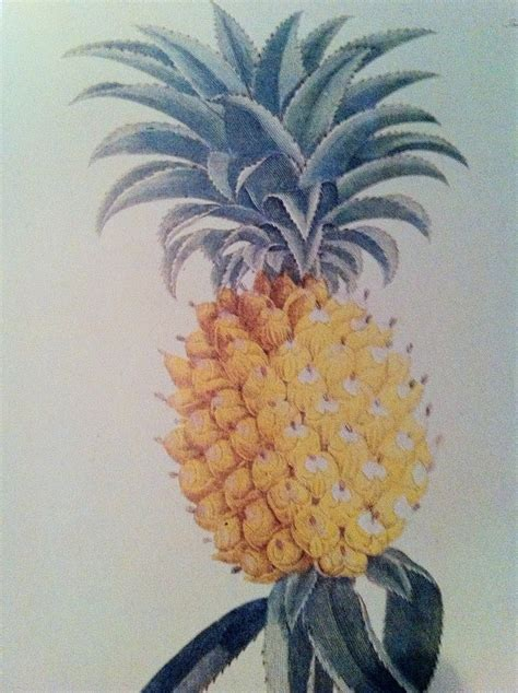 pineapple obsession for your 17 best images about bananas pineapples on