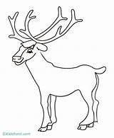 Elk Coloring Pages Bull Drawing Head Simple Printable Sketch Horns Template Getdrawings Popular Getcolorings Library Clipart sketch template