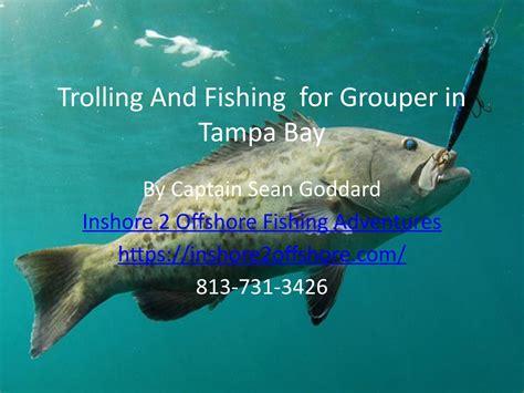 grouper fishing tampa bay trolling inshore offshore