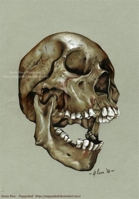 Skull Atomic Circus Contest Poppysleaf Deviantart