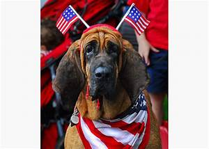10 Dogs Dressed Up in Red, White and Blue - Photo Gallery