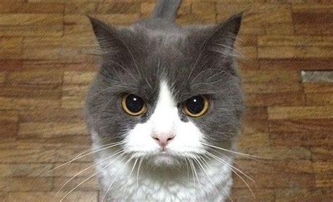 Gerne sind auch eure wünsche willkommen. Arquivos gato com raiva | Mania de Gato