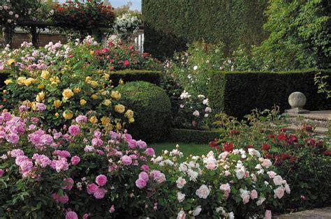 david garden david austin english climbing roses cottage garden living