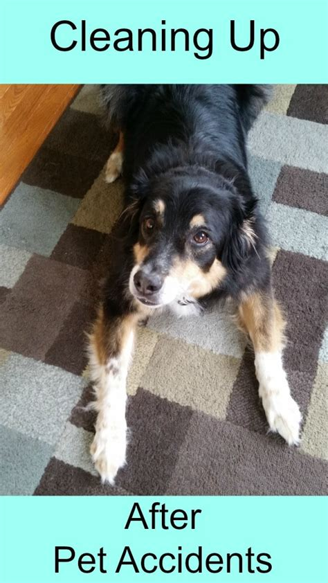 cleaning   pet accidents  hardwood  tile