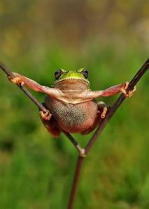Incredible Impressive Frog In Pictures