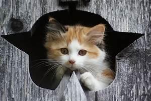 Kochen Für Katzen : kleine katzen sind so drollig mit liebe zum detail ~ Lizthompson.info Haus und Dekorationen