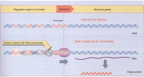 Benjamin Lewin Genes Vii Pdf Download