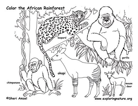 Rainforest Animals Coloring Pages by Wetland Coloring Page Exploring Nature Educational Resource