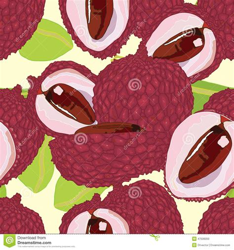 lychee fruit drawing lychee seamless pattern stock vector image 47506050